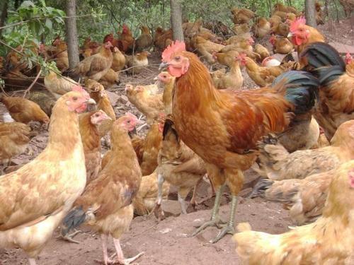 营造良好的饲养管理环境的重要性: